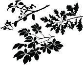 Branch,Oak Tree,Silhouette,Leaf,Chestnut Tree,Apple Tree,Black Color,Plant,Apple Blossom,Botany,Foliate Pattern,Nature,Ilustration,Painted Image,No People,Growth,Computer Graphic,Clip Art