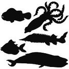 Tentacle Sucker,Silhouette,Back Lit,Animal Scale,Sturgeon,Swimming Animal,White,vector illustration,Vector,Paintings,Fish,Clown Fish,Black Color,Whale,Colmar,Ilustration,Animal,Pencil Drawing,Animal Fin