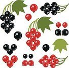 Exoticism,Symbol,Set,Design Element,Vector,Abstract,Currant,Cooking,Red,Ilustration,Berry
