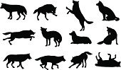 Wolf,Silhouette,Running,Animal,Vector,Jumping,Outline,Hound,Black Color,Walking,Animals In The Wild,Dark,Wild Animals,Mammals,Animals And Pets,Nature,Animal Foot,Full,Mammal