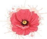 Backgrounds,Vector,Painted Image,Poppy,Watercolor Painting,Design Element,Plant,Leaf,Composition,Pattern,Summer,Image,Pink Color,Blossoming,Springtime,Modern,Drop,splodge,Nature,Celebration,Beauty In Nature,Floral Pattern,Petal,Invitation,Design,Wedding,Elegance,Square,Holiday,Birthday,Facial Expression,Blob,Ideas,Greeting Card,Greeting,Spray,Abstract,Single Flower,Sketch,Decoration,Flower,Romance,Outline,Ilustration