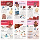 Infographic,Diagram,Human Brain,Backgrounds,Chart,Data,Ilustration,Human Internal Organ,Inside Of,Set,Healthcare And Medicine,Vector,Symbol,Order,Nephron,Gall Bladder,Composition,Science,Human Lung,Steps,Creativity,Sign,Kidney,Human Nervous System,Computer Graphic,Design Element,Human Heart,Blood,Human Digestive System,Respiratory System,Human Cell,Design,Flat,People,Liver,Doctor,Concepts,Work Tool,Ideas,Equipment,Stomach