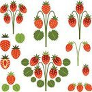 Exoticism,Symbol,Set,Design Element,Vector,Abstract,Strawberry,Branch,Ilustration,Berry Fruit
