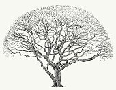 branched,Drawing - Art Product,Winter,Shady Tree,Deciduous Tree,Symbol,Nature,Outdoors,Season,Stem,Oak Tree,Branch,Tree,Maple,Twig,Tree Trunk,Silhouette,Springtime