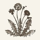 Flower,Vector,Sketch,Dandelion,Blossom,Stem,Contour Drawing,Drawing - Art Product,Leaf,Set,Etching,Silhouette,Hand-drawn,Old-fashioned,hand drawn,Ink,Art,Incomplete,Flower Bed,Computer Graphic,Summer,Botany,Design Element,Gardening,Retro Revival,Art Product,Ilustration,Petal,Floral Pattern,Grunge,Plant,Nature,Flourish,Isolated,Bud,Decoration,Vegetative Stage