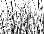 White Background,Grass,Autumn,Twig,Branch,Ilustration,No People,Design Element,Nature,Wetland,Outdoors,Plant,Marsh,Black And White,Straight,Horizontal,Ornamental Grass,Dead Plant,Isolated On White,Curled Up,Bush,Grass Family,Dried Plant,Vector