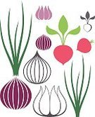 Onion,Agriculture,Symbol,Crop,Red,Abstract,Icon Set,Green Color,Sign,Set,Garlic,Vegetable,Autumn,Radish,Vector,Isolated,Food,Plant