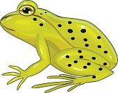 Frog,Small,Spotted,Toad,Animal,Common Frog,Green Color,Amphibian