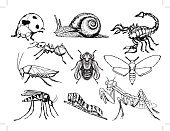 Vector,Symbol,Moth,Praying Mantis,Sketch,Cartoon,Nature,Set,Ilustration,Caterpillar,Fly,Ladybug,Insect,Collection,Snail,Scorpion,Mosquito,Cockroach,Ant,Wildlife