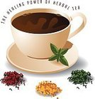 Echinacea,Mint,Drink,Recovery,Medicine,Nature,Healthcare And Medicine,Text,Close-up,Cup,Mug,Plant,Healthcare Worker,Tea - Hot Drink,Green Color,Heap,Herb,Dried Plant,Leaf,Petal,Seed,Rose - Flower,Mint Leaf - Culinary,Healthy Lifestyle,Beauty,Refreshment,Dry,Hibiscus,Temptation,Raw Food,Chamomile,Field Marigold,Illustration,Organic,Herbal Medicine,Beauty In Nature,Gourmet,Coffee Cup,Beauty Treatment,Healthy Eating,Vector,Typescript,Echinacea,Hyssop,Beautiful People,Infuser,Preparation,2015,Calendula Arvensis,Chamomile,Rose