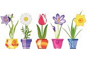 Violet,Purple,Yellow,Red,Orange Color,White,Campanula,Number 5,Blue,Green Color,Growth,Ilustration,Isolated,Daisy,Potted Plant,Chamomile Plant,Crocus,Seedling,Plant,Nature,Daffodil,Chamomile,Flower Head,Individuality,Colors,Blossoming,Blossom,Contrasts,Flower Pot,Leaf,Flower,Vase,Pink Color,Vector,Springtime,Saffron,Summer,Tulip,Narcissus,Season,Image,Design,Gardening,Bluebell
