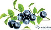 Close-up,Gourmet,Dessert,Dieting,Blue,Blueberry,Photo-Realism,Ilustration,Sweet Food,Berry Fruit,Food,Fruit,Organic,Summer,Vector,Vitamin Pill,Leaf,Ripe,Green Color,Healthy Eating,Huckleberry,Juicy,Black Color