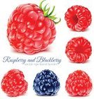 Juice,Juicy,Preserves,Ilustration,Healthy Lifestyle,Ripe,Safety,Forest,Photo-Realism,Sweet Food,Red,Fruit,Food,Berry Fruit,Summer,Vector,Leaf,Raspberry,Blackberry,Dieting,Gourmet,Cream,Compote,Green Color