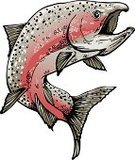 Salmon,Fish,Fishing,Jumping,Spawning,Ilustration,Vector,Swimming Animal,Sea Life,Animal,Pink Color,Illustrations And Vector Art,Wild Animals,Sea Life,Animals And Pets,Animal Fin,Silver Colored,Red,Gray,Spawning Salmon