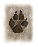 Track,Symbol,Sign,Footprint,Vertical,Design,Scar,Animal,Animal Body Part,Shape,Black Color,White Color,Dog,Wolf,Coyote,Mud,Claw,Animal Foot,Paw,Track - Imprint,Tracing,Illustration,Print,2015