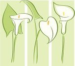 Calla Lily,Lily,Vector,Flower,Decoration,Scroll Shape,Abstract,Line Art,Modern,Art,Ilustration,Design,Backgrounds,Design Element,Drawing - Art Product,Computer Graphic,Clip Art,Deco,Swirl,Springtime,Drawing - Activity,Elegance,Ornate,Summer,Art Product,Beautiful,Color Image,Cultures,Three Objects,White,Classical Style,Nature,Flowers,Green Color,Digitally Generated Image,Vertical,Painted Image