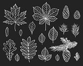 Set,Nature,Blackboard,Design,Pencil,Plant,White Color,Old-fashioned,Tree,Branch,Leaf,Season,Twig,Pine Cone,Springtime,Summer,Winter,Autumn,Evergreen Tree,Pine Tree,Maple Tree,Oak Tree,Forest,Backgrounds,Needle - Plant Part,Cedar Tree,Spruce Tree,Ash Tree,Aspen Tree,Asphalt,Chalk Drawing,Pencil Drawing,Illustration,Template,Group Of Objects,No People,Vector,Backdrop,Pinaceae,2015,Pine Wood,Pine