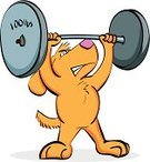 Dog,Exercising,Cartoon,Weightlifting,Animal,Gym,Sport,Muscular Build,Strength,Weights,Weight Training,Sports Training,Cheerful,Characters,Power,Happiness,Canine,Mass - Unit Of Measurement,Mammal,Mixed-Breed Dog,Animals And Pets,Dogs,Illustrations And Vector Art,Mammals,Vector Cartoons