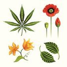 Marijuana,Marijuana Plant,Mint Leaf - Culinary,Leaf,Vanilla,Poppy,Vector,Herb,Flower,Ilustration,Herbal Medicine,Hemp,Computer Icon,Narcotic,Medicine,Smoking,Set,Isolated,Growth,Floral Pattern,Plant,Grass,Plants,Flowers,Nature,Illustrations And Vector Art,Green Color,Isolated On White,Vector Florals