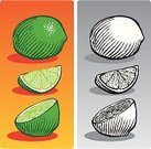 Lime,Woodcut,Fruit,Etching,Citrus Fruit,Slice,Food,Ilustration,Black And White,Vector,Old-fashioned,Isolated,Food And Drink,Illustrations And Vector Art,Isolated Objects,Isolated-Background Objects,Fruits And Vegetables,Food And Drink,Isolated On Gray,Healthy Eating,Freshness,Sweet Food,Ink Drawing