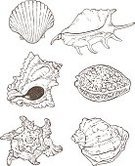 Nature,Design,Drawing - Art Product,Animal Shell,Scallop,Summer,Sea,Beach,Coral Sea,Outline,Conch Shell,Pencil Drawing,Illustration,Sketch,Vector,Fashion,Cowrie Shell,Cockle Shell,2015,Undersea,Giant Scallop,70082