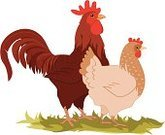 Chicken - Bird,Rooster,Cockerel,Cartoon,Farm,Vector,Eggs,Ilustration,Animal,Poultry,Livestock,Food,Agriculture,Red,Flu Virus,Bird,Rural Scene,Pride,Claw,Domestic Animals,Profile View,Nature,Beak,Vector Cartoons,Vibrant Color,Birds,Male Animal,Color Image,Feather,Animals And Pets,Illustrations And Vector Art,Farm Animals