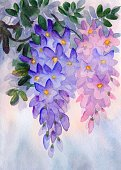 Creativity,Growth,Nature,Vertical,Textured Effect,Drawing - Art Product,Purple,Flower,Flower Head,Petal,Bud,Acacia Tree,Backgrounds,Hanging,Watercolor Painting,Blossom,Illustration,Sketch,Painted Image,Textured,No People,Photography,Wisteria,Wistaria,2015