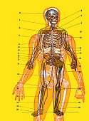 Vertical,Chart,Diagram,Cross Section,Illustration,Pop Art,No People,Anatomy,Colored Background,2015,Yellow Background