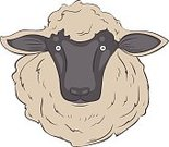 Nature,Animal,Sheep,Wool,Illustration,Herd,No People,Lamb,Vector,2015