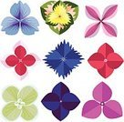 Computer Graphics,Symbol,Variation,Choice,Nature,Botany,Flag,Outdoors,Front View,Design,Plant,Wedding,Shape,Pink Color,White Color,Multi Colored,Pattern,Part Of,Flower,Flower Head,Petal,Springtime,Summer,Decoration,Backgrounds,Computer Graphic,Gardening,Hydrangea,Color Image,Florist,Ornate,Abstract,Blossom,Symbolism,Illustration,Beauty In Nature,Organist,Painted Image,Floral Pattern,Group Of Objects,Vector,Single Flower,Vibrant Color,Ideas,2015,Isolated,60500