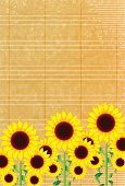 Yellow,Material,Plant Stem,Petal,Summer,Sunflower,Illustration,No People,Vector,2015,Summer Greeting