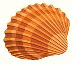 Animal Shell,Vector,Sea,Ilustration,Animal,Ornate,Abstract,Vacations,Travel,Isolated,Tropical Climate,Spiral,Summer,Multi Colored,Shape,Sea Life,Isolated Objects,Isolated-Background Objects,Beauty In Nature,Nature,Nature,Nature Symbols/Metaphors,Curve,Travel Destinations,Animals And Pets