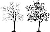 Tree,Bare Tree,Silhouette,Branch,Black Color,Vector,White,Outline,Leaf,Tree Trunk,Twig,Isolated,Backgrounds,Park - Man Made Space,Single Object,Computer Graphic,Ilustration,Deciduous Tree,Shape,Tall,Nature,Floral Pattern,Paint,Decoration,Plant,Vitality,Image,Stem,Solitude,Concepts And Ideas,Illustrations And Vector Art,Nature