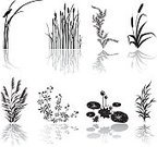 Cattail,Grass,Water Lily,Swamp,Wetland,Marsh,Stream,Lake,Grass Family,Water,Vector,Weed,Symbol,Nature,Wildlife,Computer Icon,Environment,Ilustration,Green Color,Icon Set,Clip Art,Black Color,Reflection