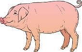 Thick,Nature,Animal,Snout,Domestic Animals,Mammal,Hoofed Mammal,Pig,Backgrounds,Pork,Cut Out,Illustration,Piglet,Vector,Livestock,White Background,2015,hand drawing