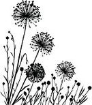 Dandelion,Silhouette,Plant,Nature,Vector,Grass,Black Color,Leaf,Floral Pattern,Uncultivated,Onion,Wild Leek,Growth,Ilustration,White Background,Rural Scene,No People,Bud