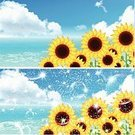 Material,Summer,Sunflower,Sea,Illustration,No People,Vector,2015,Background Illustration