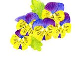 Freshness,Nature,Horizontal,Close-up,Plant,Blue,Purple,Yellow,Multi Colored,Leaf,Flower Head,Petal,Summer,Backgrounds,Gardening,Pansy,Fluorescent Light,Illustration,Copy Space,No People,2015