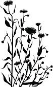 Herb,Chamomile Plant,Silhouette,Plant,Black And White,Flower,Meadow,Nature,Natural Pattern,Ornamental Garden,Grass,Flower Bed,Foliate Pattern,Leaf,Blossom,Botany,page decoration,Springtime,Summer,Floral Pattern,Vertical,Rural Scene,Beauty In Nature,Growth