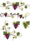 Grape,Vine,Frame,Fruit,Leaf,Food,Winery,Bunch,Vector,Ornate,Ilustration,Swirl,Decoration,Plant,Computer Graphic,Clip Art,Nature,Green Color,Crop,Sweet Food,Growth,Healthy Eating,Winemaking,Purple,Decorative Lines,Curve,Digitally Generated Image,In A Row,Freshness,White,footer,Page Border,Juicy,Ripe,Illustrations And Vector Art,Food And Drink,Nature,Plants,Fruits And Vegetables