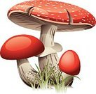 Botany,Red,Fungus,Mushroom,Toadstool,Forest,Fly Agaric Mushroom,Cut Out,Grass,Illustration,Group Of Objects,Small Group of Objects,Vector,White Background,2015