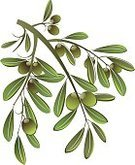 Olive,Olive Branch,Healthy Eating,Cooking,Organic,Mediterranean Food,Vegetable,Vector,Food,Nature,Ilustration,Plant,Green Color,Isolated On White,Design Element,Plants,Health Backgrounds,Makeup/Cosmetics,Nature,Beauty And Health