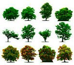 Tree,Forest,Vector,Isolated,Woodland,Outline,Wood - Material,Ilustration,Tracing,Branch,Illustrations And Vector Art