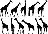 Set,Agriculture,Nature,Animal Wildlife,Outdoors,Africa,Animal,Grazing,Horned,Animals In The Wild,Mammal,Hoofed Mammal,Giraffe,Silhouette,Pasture,Illustration,Group Of Objects,Medium Group of Objects,No People,Vector,Livestock,Safari Animals,2015,Camelopard