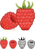 Raspberry,Fruit,Berry Fruit,Vector,Ilustration,Food,Red,Organic,Macro,Vector Icons,Fruits And Vegetables,Illustrations And Vector Art,Food And Drink,Healthy Eating,Ripe