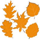 Birch Leaf,Autumn Leaves Isolated,No People,Illustration,Leaf,2015,Autumn,Aspen Leaf,autumn tree,Vector