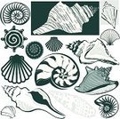 Animal Shell,Conch Shell,Nautilus,Vector,Ilustration,Icon Set,Clip Art,Set,Design Element,Sea Life,Vector Icons,Isolated Objects,Illustrations And Vector Art,Collection,Animals And Pets