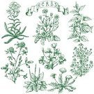 Beauty Product,Recovery,Nature,Rural Scene,Plant,Stinging,Drawing - Activity,Green Color,Flower,Uncultivated,Root,Leaf,Flower Head,Petal,Summer,Meadow,Decoration,Stinging Nettle,Wood Sorrel,Clover,Pharmacy,Outline,Chamomile,Blossom,Yarrow,Illustration,Herbal Medicine,Rustic,Sketch,Painted Image,Vector,Beauty Spa,Collection,Wildflower,Bunch of Flowers,2015,Chamomile