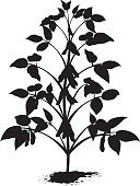 Soybean,Plant,Silhouette,Agriculture,Vector,Black Color,Clip Art,Ilustration,Isolated