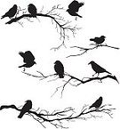 Bird,Branch,Silhouette,Crow,Black Color,Vector,Flying,Bare Tree,White,Common Blackbird,Ilustration,Sitting,Perching,Clip Art,Isolated,Group Of Animals,No People